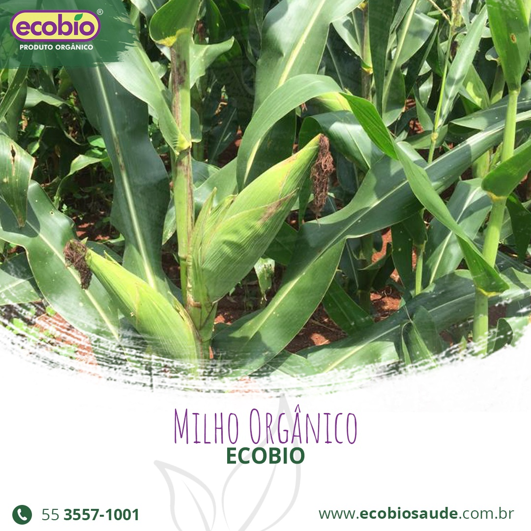 Milho Orgânico Ecobio